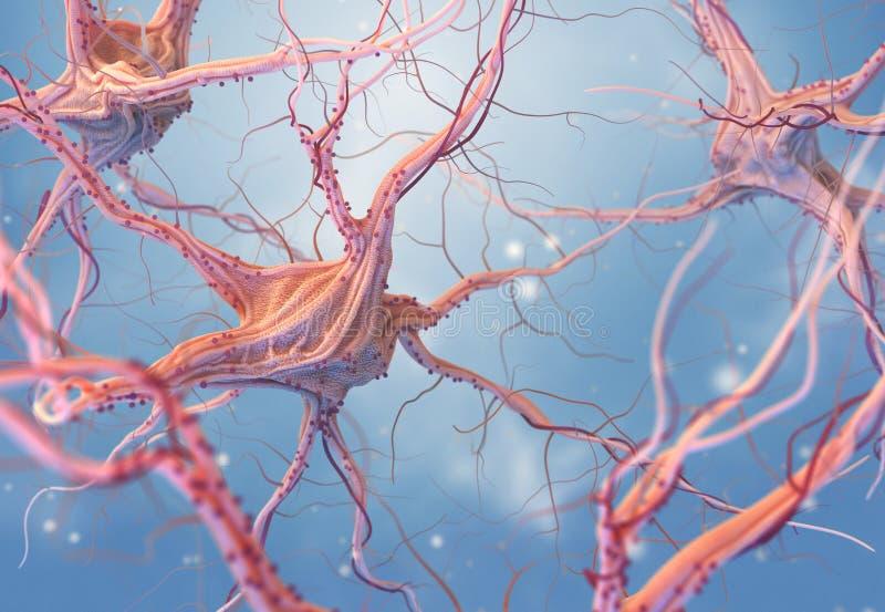 紧张的神经元系统 库存例证