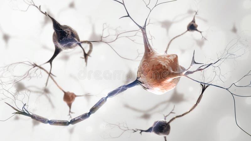 紧张的神经元系统 皇族释放例证
