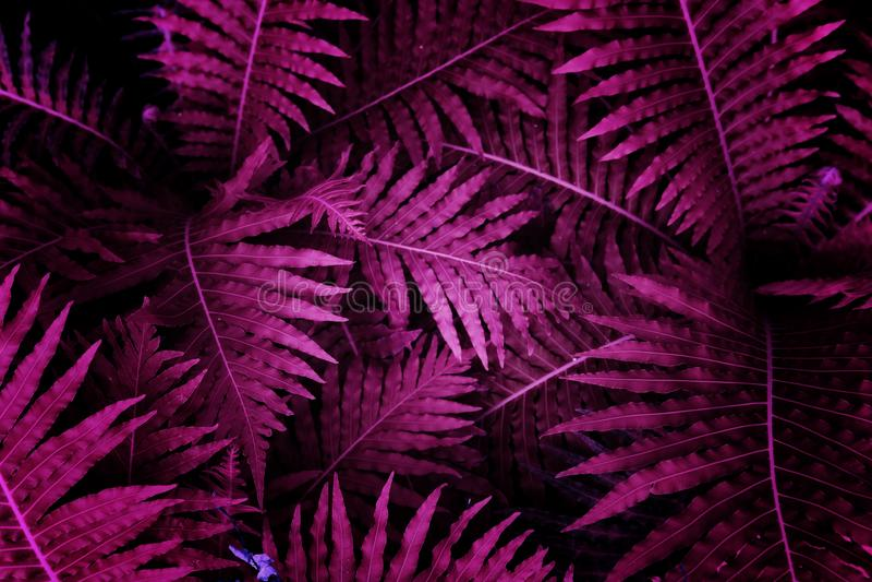 紫外背景影响由热带叶子制成 库存照片
