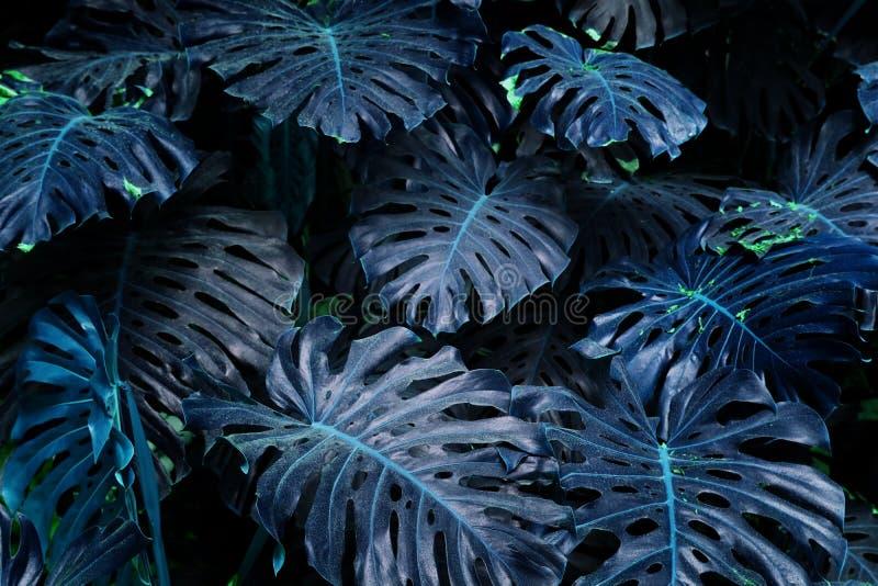 紫外背景影响由monstera热带叶子制成 免版税库存图片