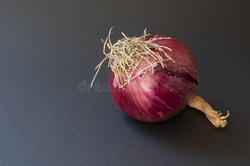 紫洋葱 免版税库存照片