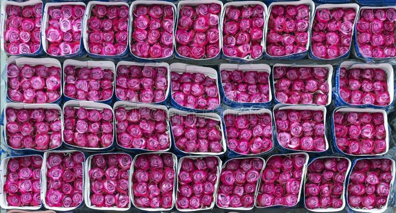 紫红色的玫瑰出口,基多,厄瓜多尔 库存照片