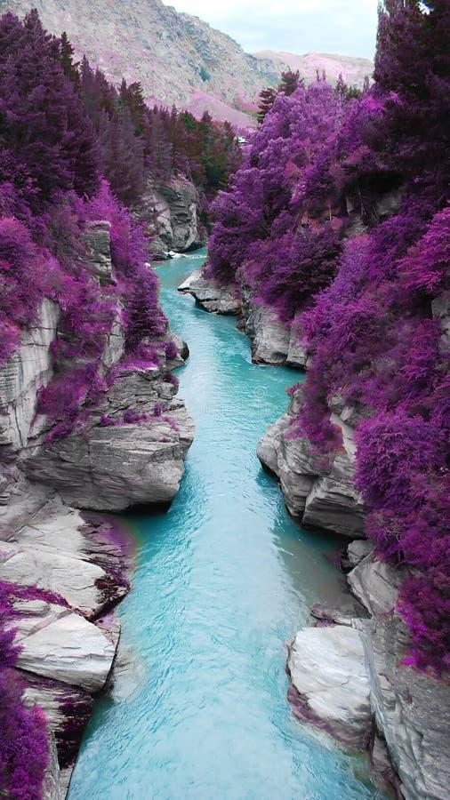 紫罗兰叶子在河 免版税库存图片