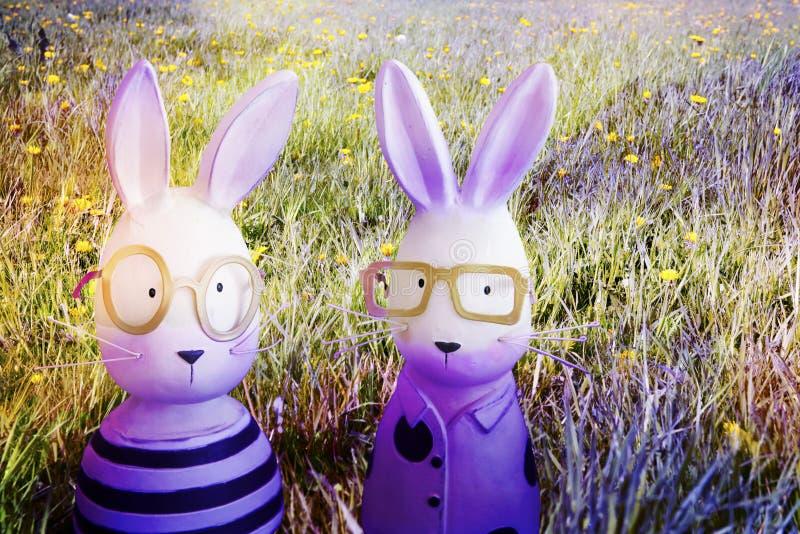 紫罗兰色复活节兔子在春天草甸 库存图片