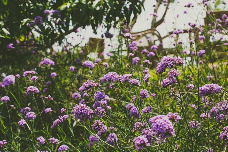 紫罗兰色花的域 免版税库存图片