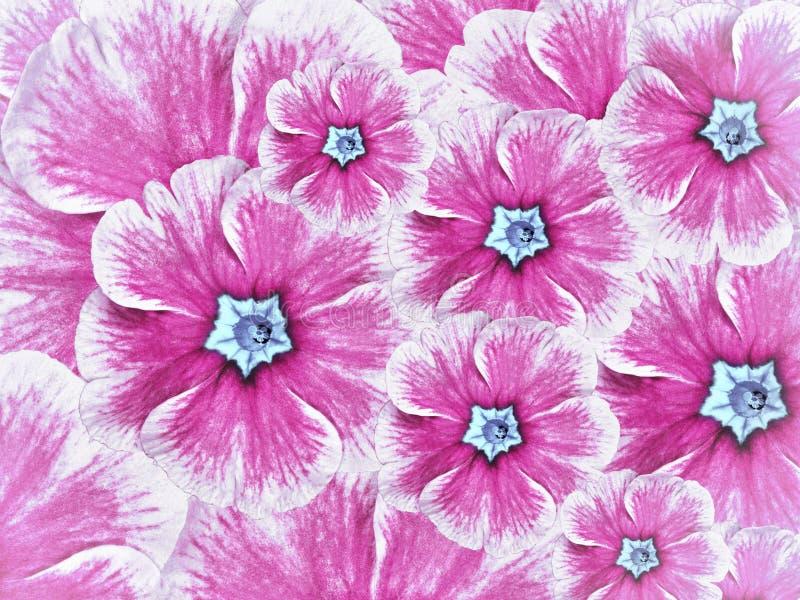 紫罗兰色花花卉背景  与浅兰的中部的花白色桃红色 库存照片