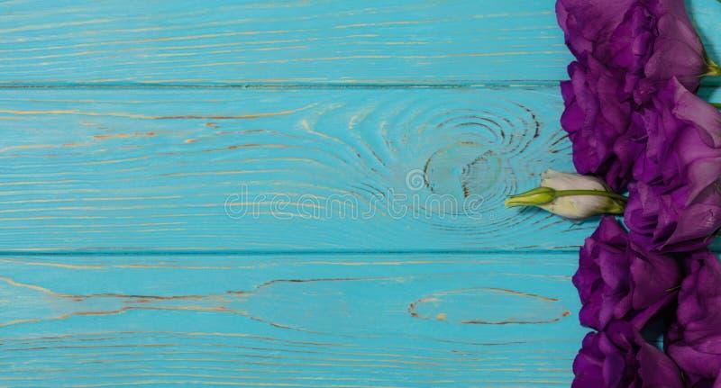 美洲色�_紫罗兰色花-南北美洲香草,在白色蓝色背景. 明信片, 开花.