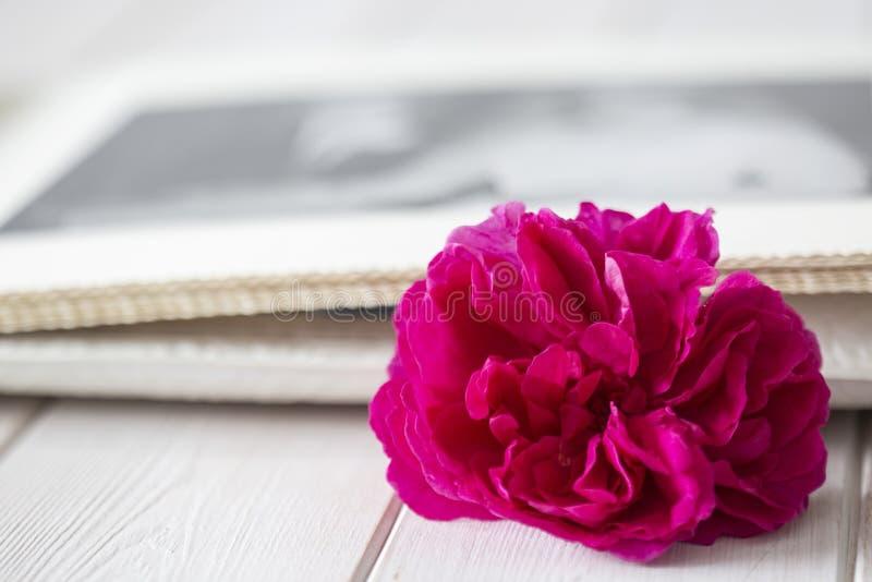紫色上升了与在一个婚姻的册页的一张照片在背景中 库存图片