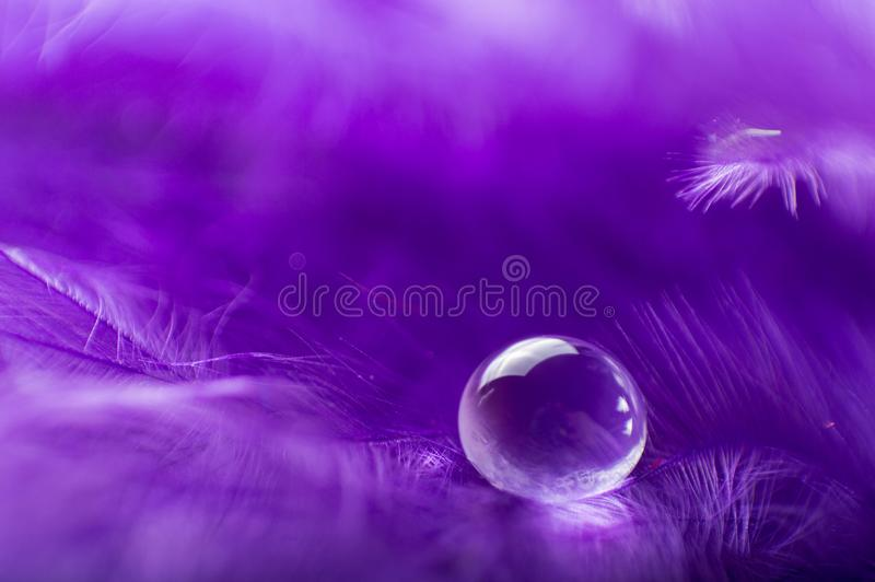 紫色与一宏观水露滴,美好的自然本底的颜色蓬松羽毛的一个抽象图象 库存图片