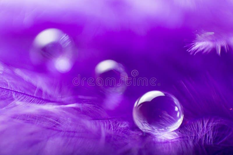 紫色与一宏观水露滴,美好的自然本底的颜色蓬松羽毛的一个抽象图象 免版税库存图片