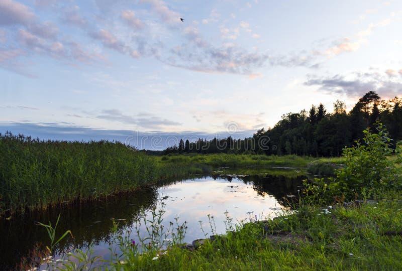 紫色云彩在池塘的水中反射了在日落,在俄罗斯的北部的不眠夜 免版税库存照片