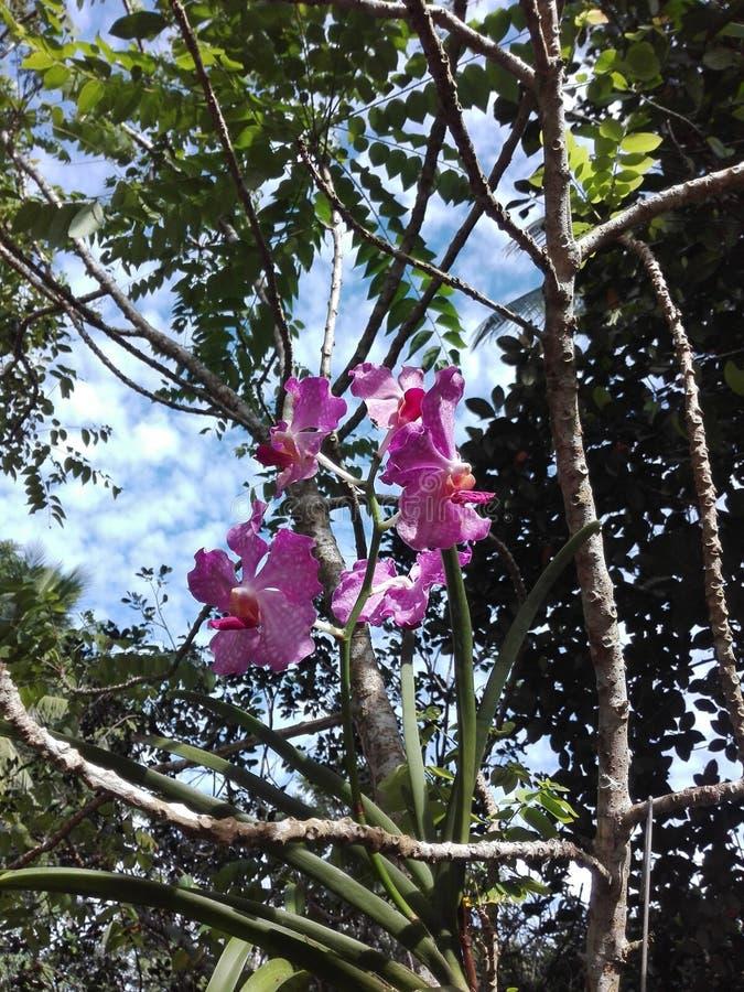 紫色兰花是开花的花 免版税库存照片