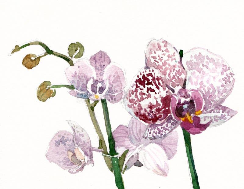 紫色兰花植物花水彩 向量例证