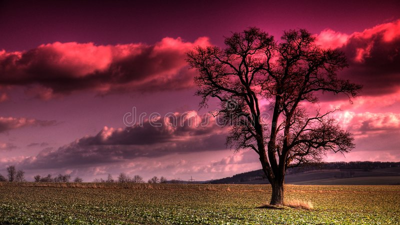 紫色天空 库存照片