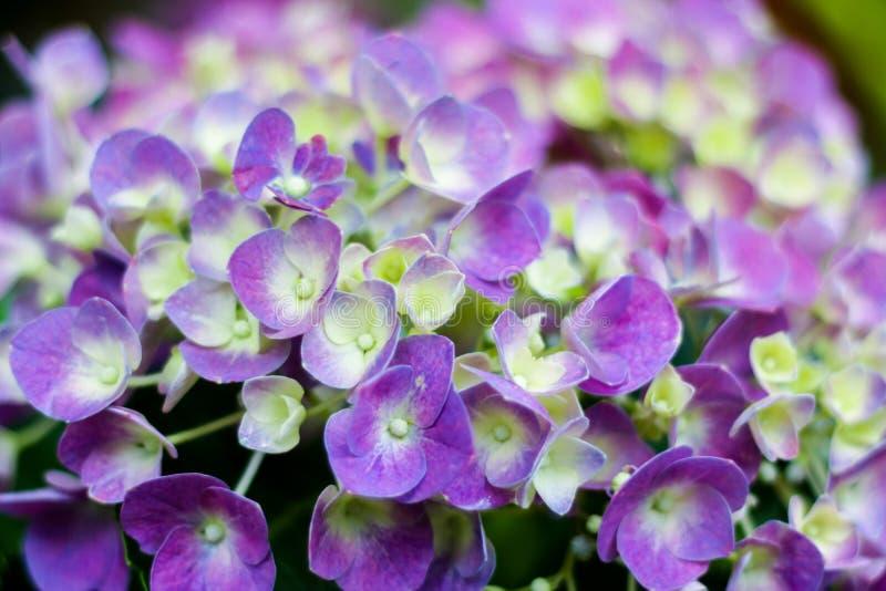 紫色宏观花 库存照片