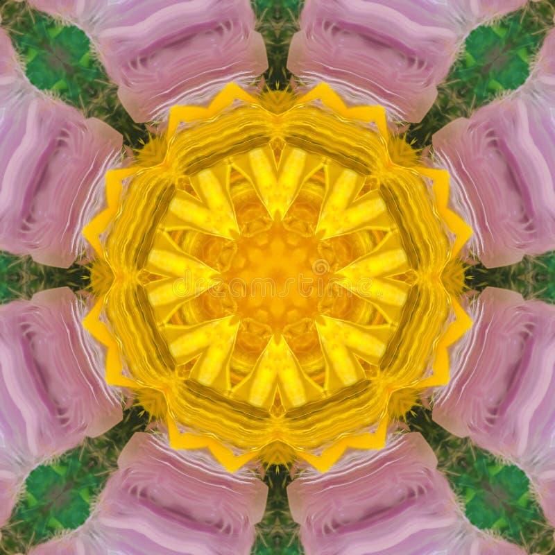 紫色数字花的黄色中心 皇族释放例证