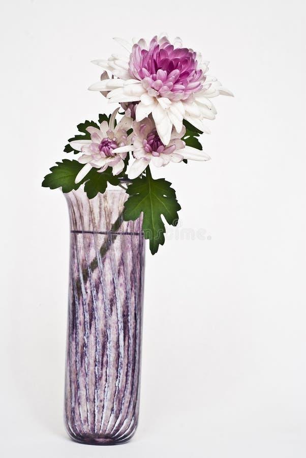 紫色明亮的花 免版税库存图片