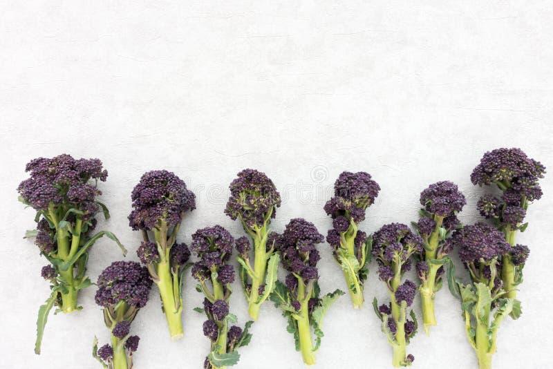 紫色洋椰菜花顶视图  免版税图库摄影