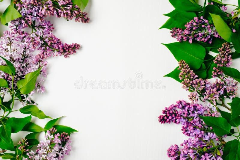 紫色淡紫色花框架边界在白色背景的 舱内甲板被放置的花卉构成,顶视图,在头顶上 春天背景, 库存照片