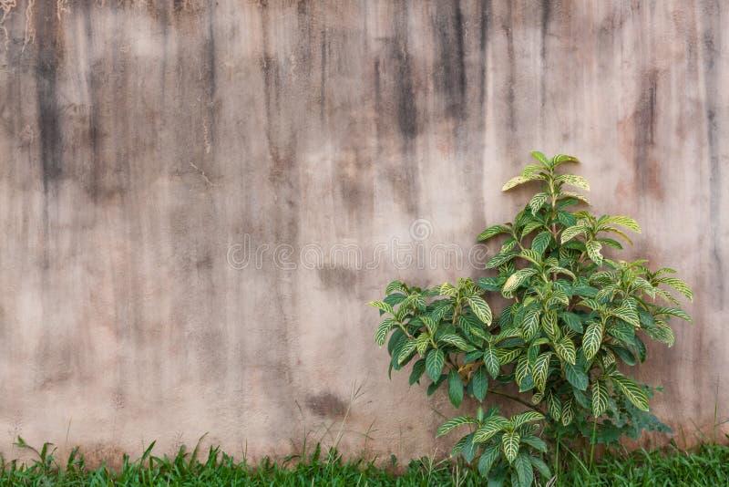 紫色混凝土墙 图库摄影