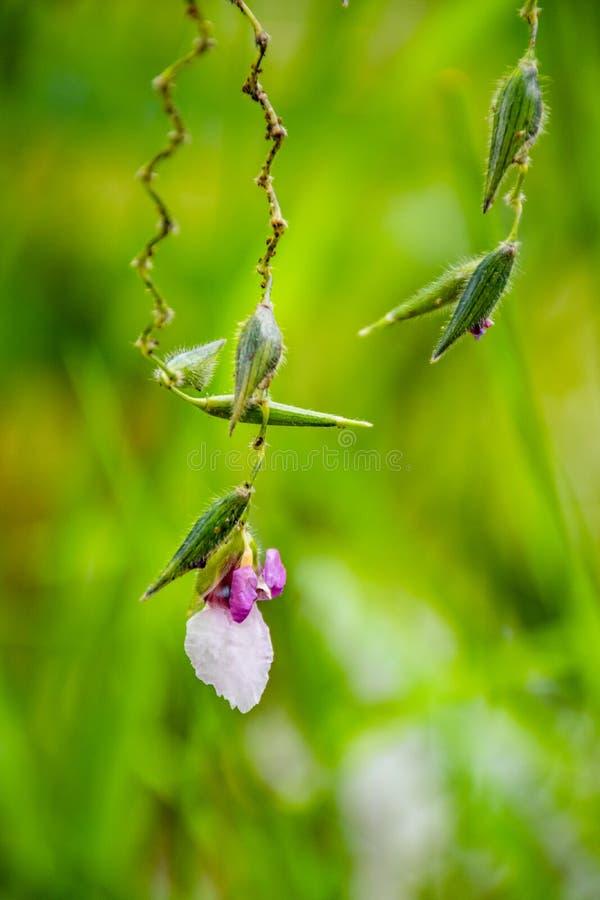紫色的野花白色和 图库摄影