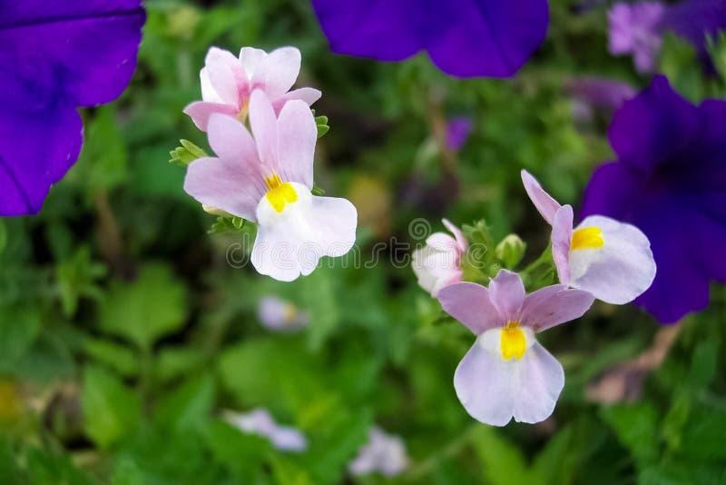 紫色短冷期龙宏观看法  库存图片