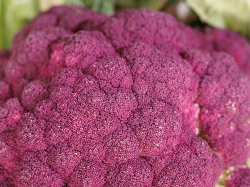 紫色硬花甘蓝素食主义者特写镜头宏指令 库存照片