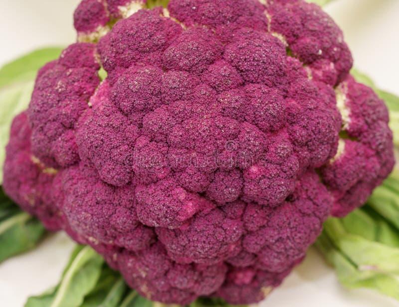 紫色硬花甘蓝素食主义者特写镜头宏指令 免版税库存照片