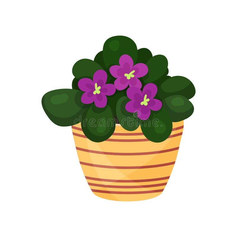 紫色紫罗兰色花室内植物,盆的花传染媒介例证 皇族释放例证