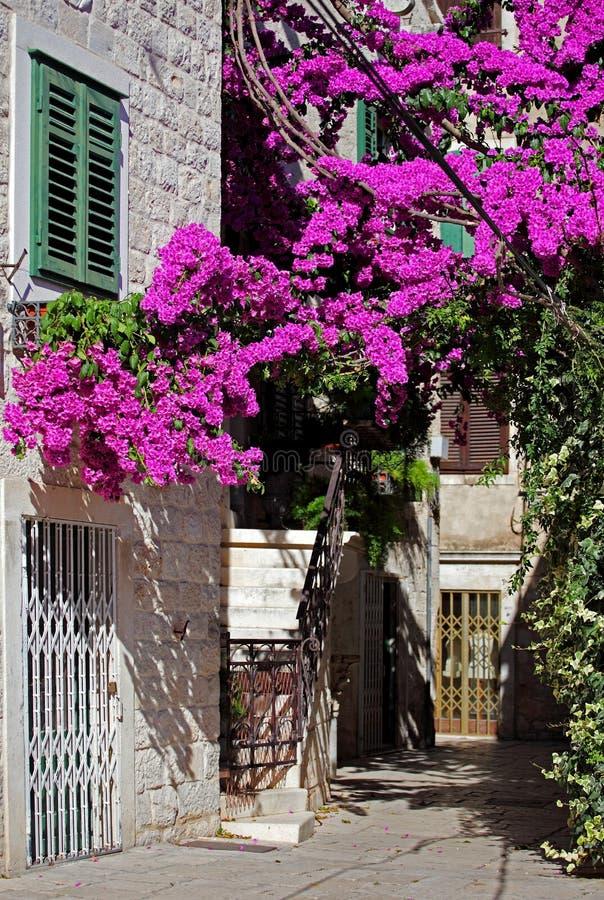 紫色结构树 库存图片