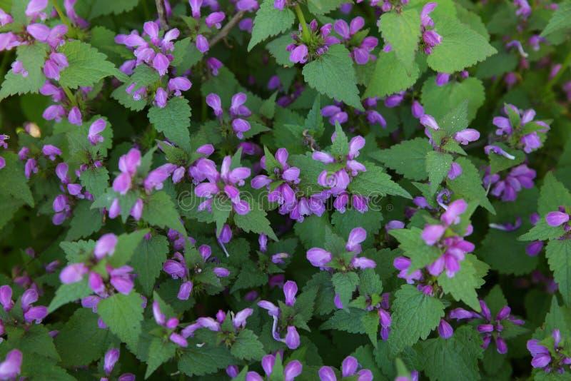 紫色花在森林里 免版税库存照片