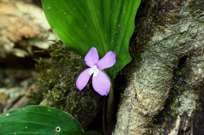 紫色花在森林里 库存照片