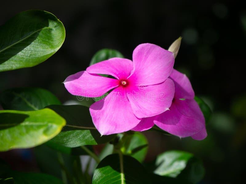 紫色花在花园里 免版税图库摄影