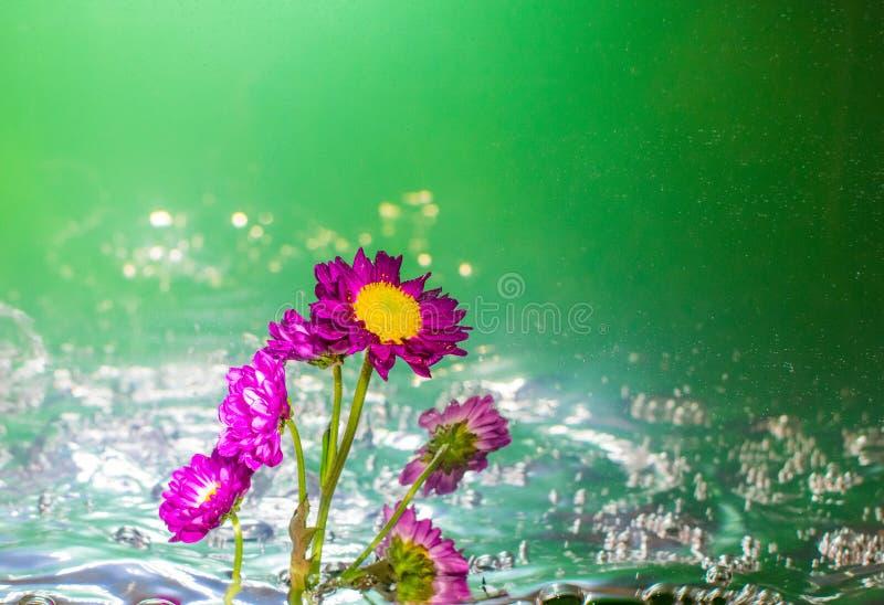 紫色花在起泡的水中有绿色背景 图库摄影