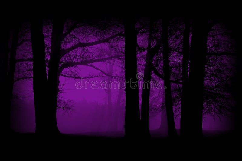 紫色,紫罗兰色森林,森林背景 免版税库存照片