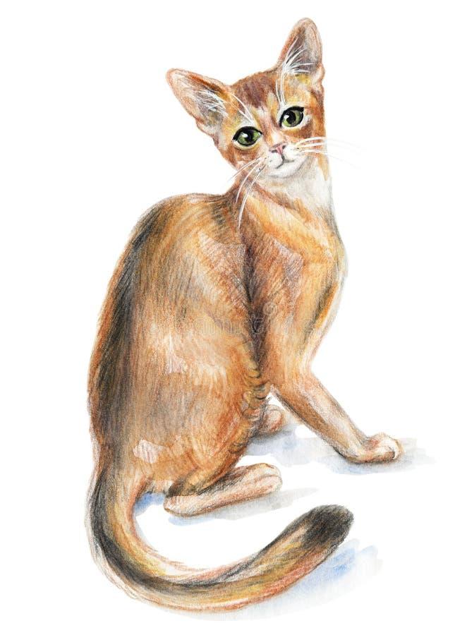 红发埃塞俄比亚猫 向量例证