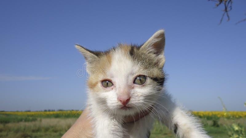 红发猫,家养的宠物 喜爱的宠物在我们的家 库存图片