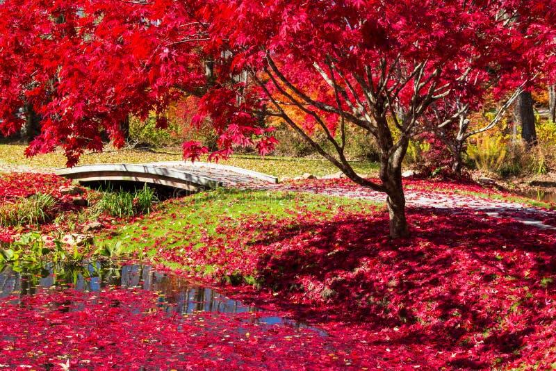 红叶子被撒布的道路在日本庭院里在乔治亚 免版税库存图片