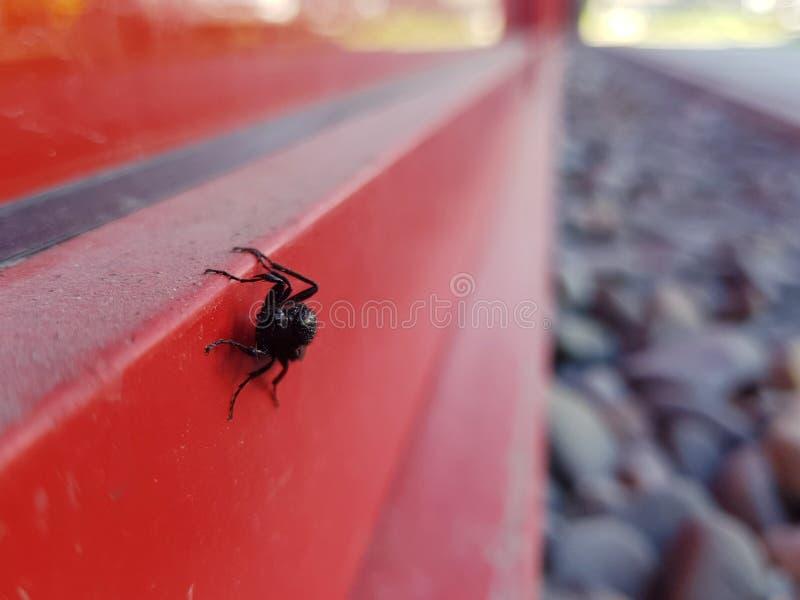 红墙上的黑苍蝇,波兰 库存照片
