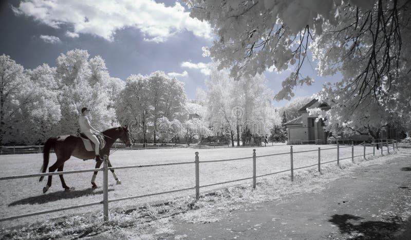 红外公园 免版税库存图片