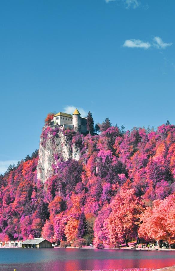 红外山在斯洛文尼亚,流血 免版税库存照片