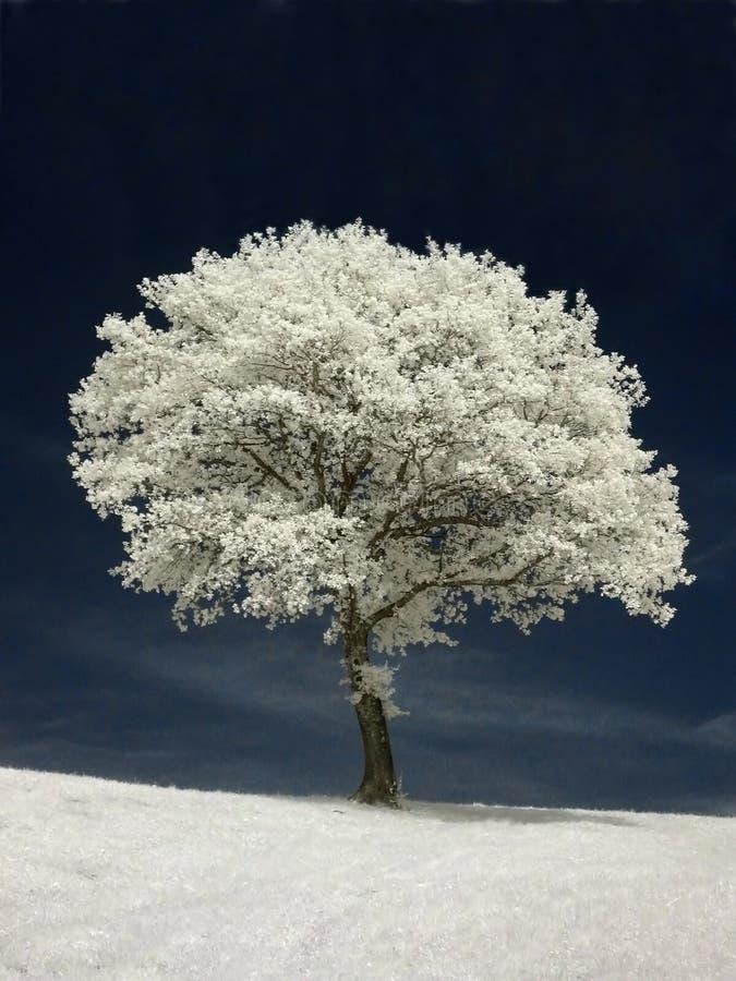 红外结构树 免版税库存照片