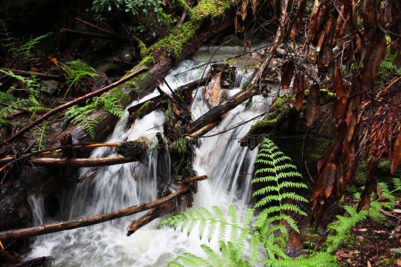 红木瀑布 库存照片