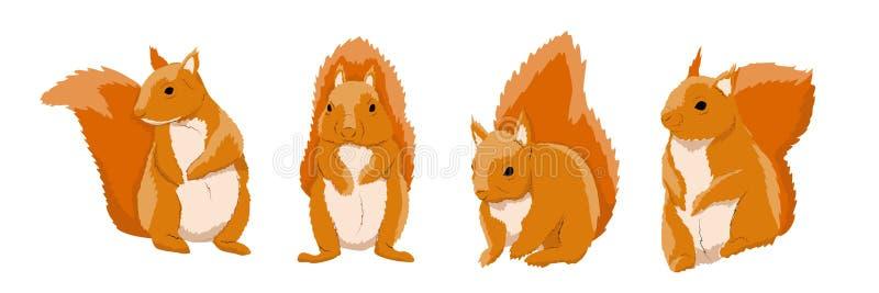 红松鼠的一汇集以各种各样的姿势 森林的野生动物 向量例证
