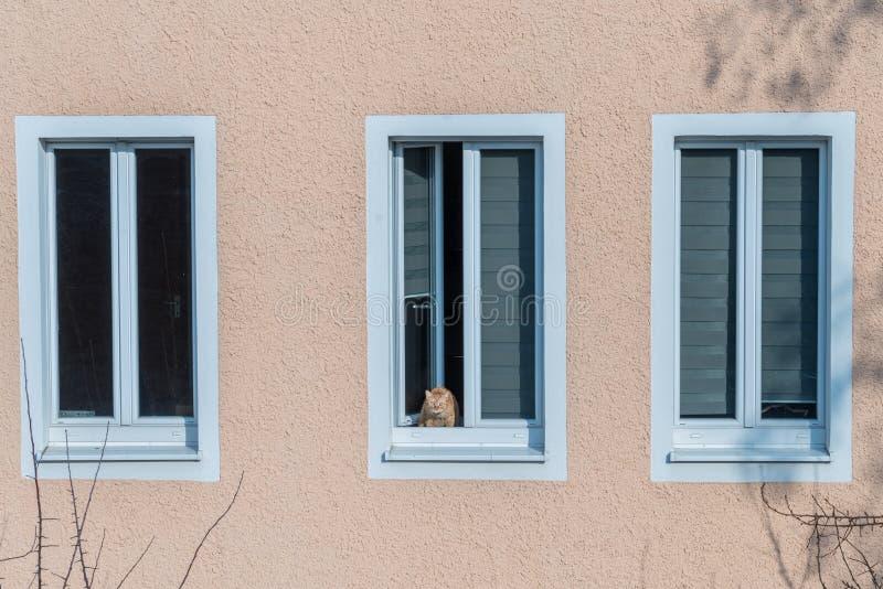 红棕色猫坐窗台并且看窗口 免版税图库摄影