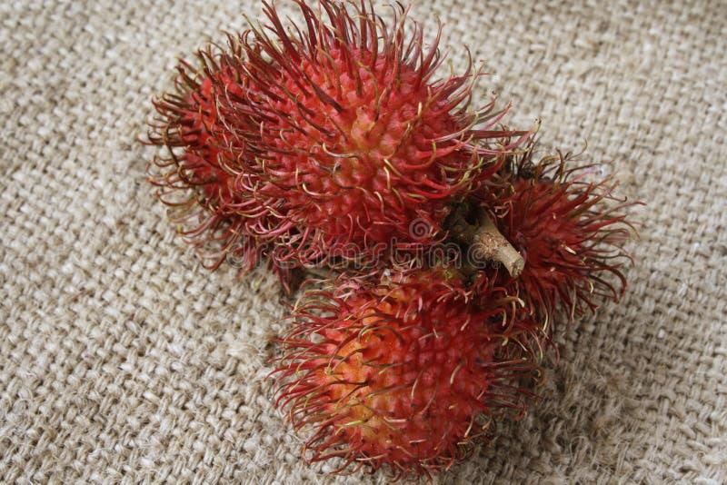 红毛丹热带水果 图库摄影