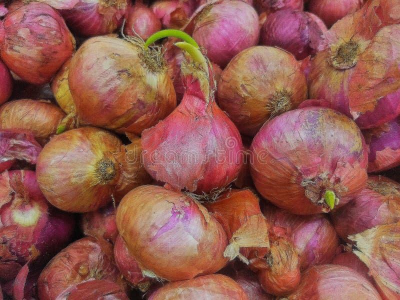 红洋葱在超级市场 免版税库存图片