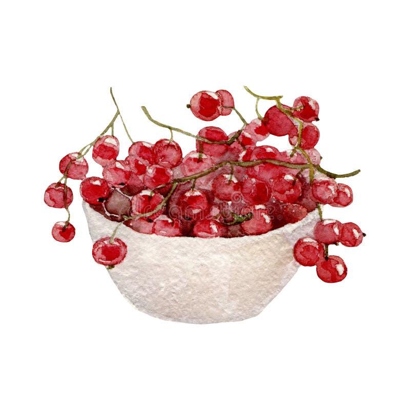 红浆果,在白色背景的水彩 库存例证