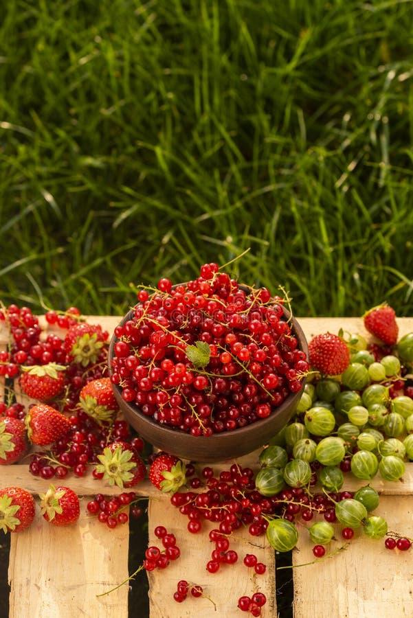红浆果,鹅莓,在一块板材的草莓在草中 库存图片