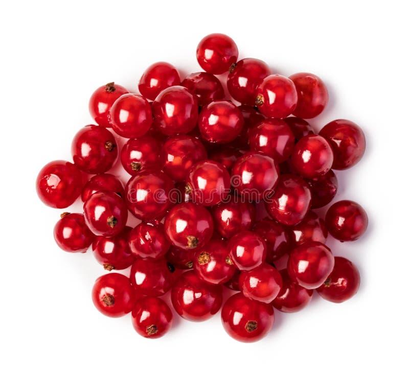 红浆果 库存照片